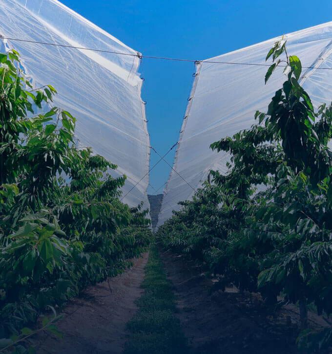 Slide Subhome Fruticultura